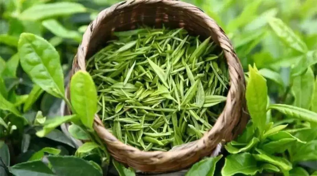 在街上茶农自产自销,只卖良心好茶